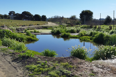 stock pond habitat enhancement